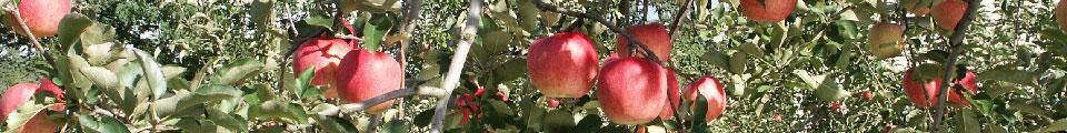 アイキャッチ:りんご協会とは